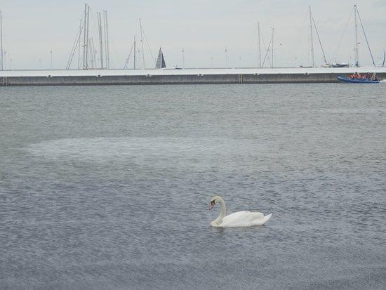 Sopot Beach: El embarcadero