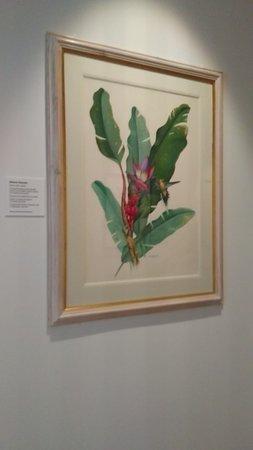 Shirley Sherwood Gallery of Botanical Art: Botanical Art