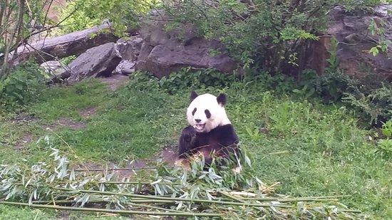 Skip the Line: ZooParc de Beauval Entrance Ticket: Panda