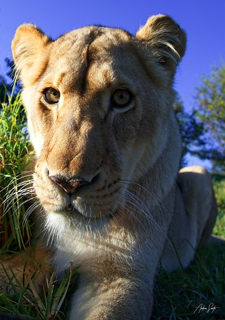 Glen Garriff Conservation: Camera?