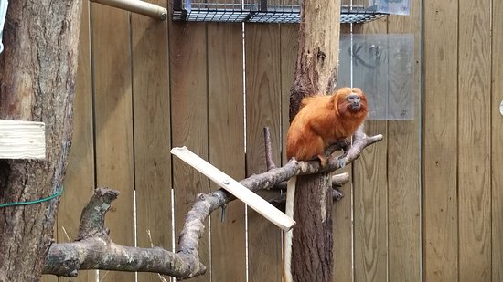Skip the Line: ZooParc de Beauval Entrance Ticket: Tamarin