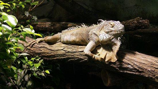 Skip the Line: ZooParc de Beauval Entrance Ticket: Iguane