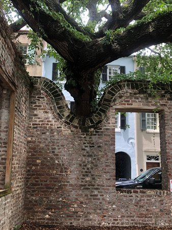 Charleston's Alleys & Hidden Passages Guided Walking Tour: A repurposed wall to accommodate a growing tree.