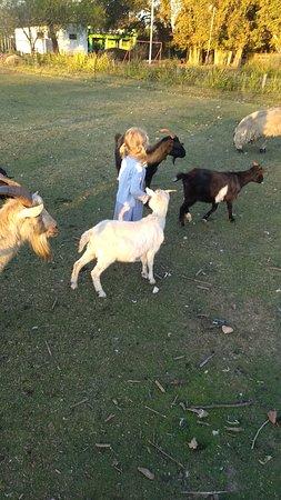 Los Girasoles: Los chicos le pueden dar de comer a los animales de la granja