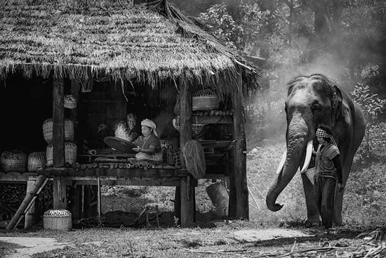 Karen's Tribe Native Elephants