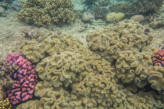 Passions of Paradise Great Barrier Reef Snorkel and Dive Cruise from Cairns by Luxury Catamaran: Beautiful coral on the first dive location