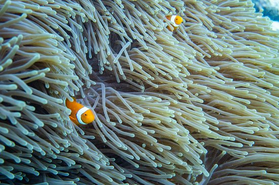 Passions of Paradise Great Barrier Reef Snorkel and Dive Cruise from Cairns by Luxury Catamaran: We saw nemo!