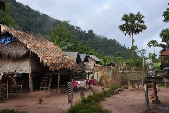 Forest Retreat Laos: morning