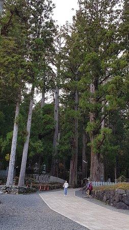 Дерево и человек.