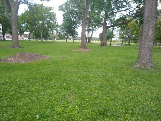 McArthur Park Arboretum