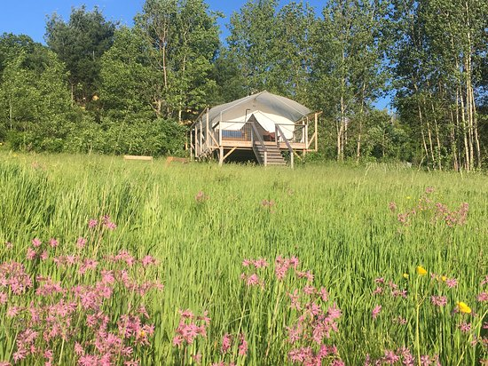 """The Meadow @ Shelterbelt Farm: The cabin overlooks a meadow full of wildflowers and is occasionally grazed by our """"flerd"""" (flock + herd) of cows and sheep."""