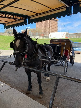 "Quebec, Canada: Our horse ""Mignon"" and carriage. His first day back after a brief vacation. He was eager to work for carrots."