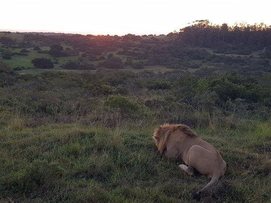 Foto de Schotia Safaris Private Game Reserve