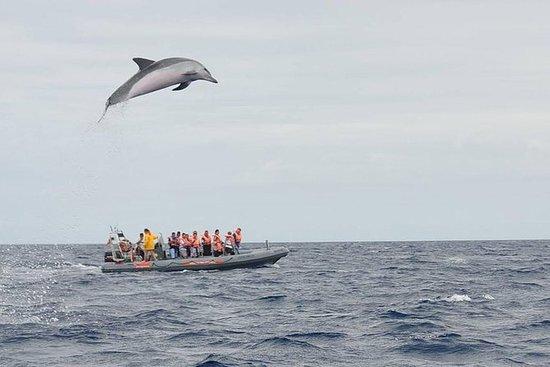 Passeio de Barco Único (Baleias e...