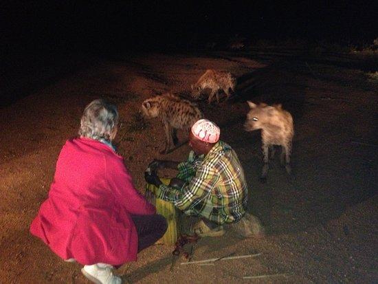 Feeding the hyenas in Harar