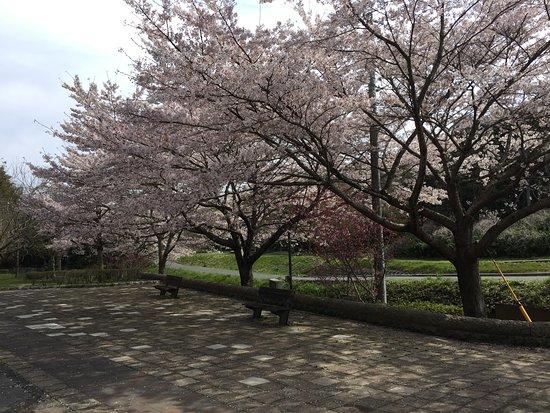 Sakasagawa Ryokuchi Park