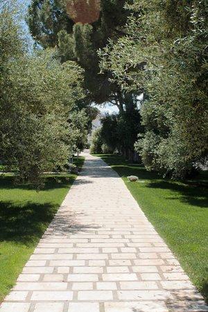 Villa Ciccorosella: ingresso