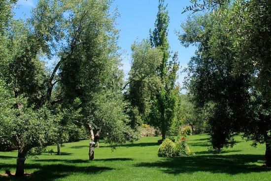 Villa Ciccorosella: giardino con ulivi