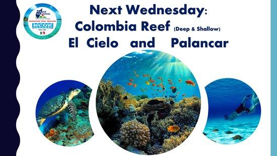 Studio Blue Cozumel Divers: Snorkeling Tour full of fun and pleasure!!!  contact: info@studioblue.com.mx