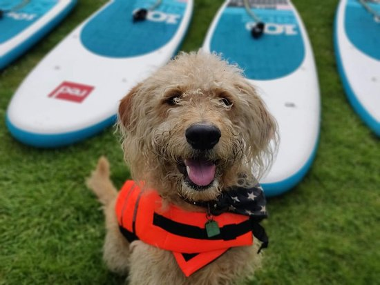 Pershore, UK: We teach Dogs on Paddleboards