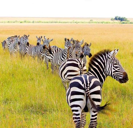‪Kenya Incentive Tours & Safaris - Day Tours‬