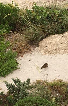 Bunnies live in the dunes!