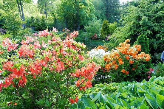 Czerwiec - różaneczniki