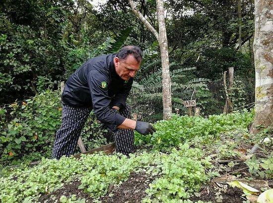 Sembrando y cosechando para nuestras ensaladas y salsas.