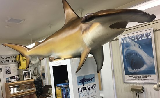 Living Sharks Museum & Research Center