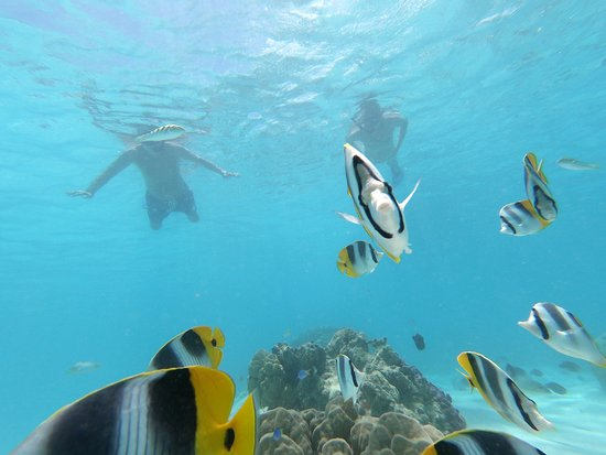 Private 3-Hour Boat Tour of Moorea Lagoon: A few of the thousands of fish we saw.