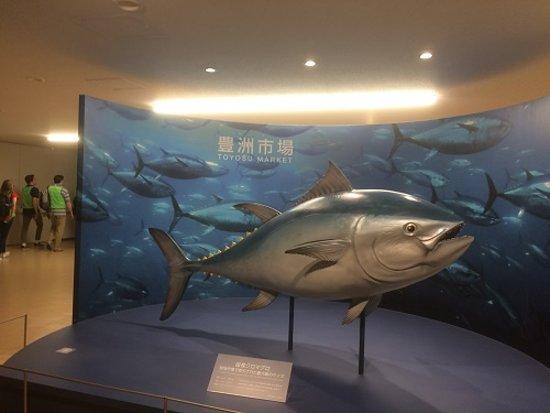 Signage And Tuna Display