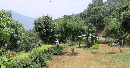 Ideal destination for a vacation with your Pet  in a true  Pet friendly resort camp in Hills