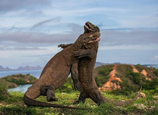 Komodo National Park, Indonesien: Komodo Island, Indonesia