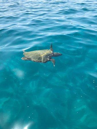 turtle spotting