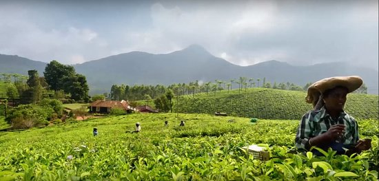 Trekking, Cycling And Camping Tour In Wayanad: 7