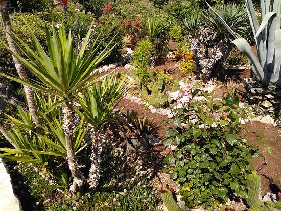 Ceglie Messapica, Taliansko: Angolo di paradiso terrestre, ove potete ammirare le specie floreali del Mediterraneo