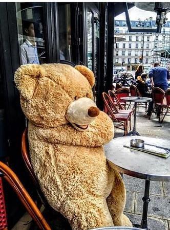 L'ours des Gobelins, au Petit Monge, c'est Demoiselle Lola !