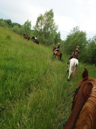 Trebukhovtsy, أوكرانيا: Супер классный активный отдых! Туры на лошадях! Красивые ухоженные лошадки. Самый вкусный шашлык и мангал-меню. Мы ждем Вас в гости.