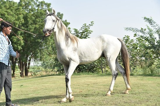 National Research Centre on Equines, Bikaner Campus