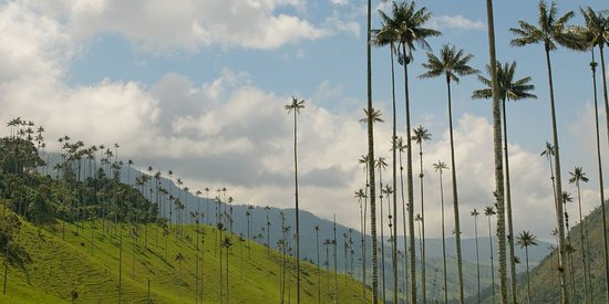 Armenien, Colombia: Do you know where the world's tallest palm trees are? Read this article:  https://travelongocolombia.com/blog