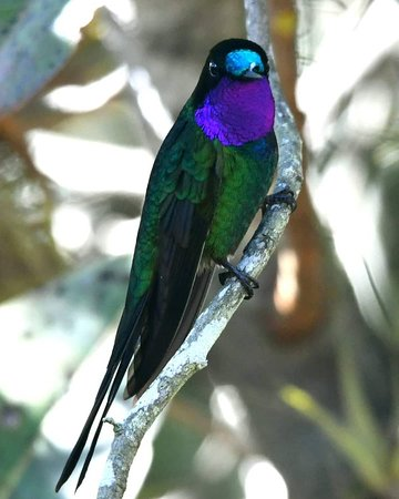 ECUADOR, THE COUNTRY WITH MOST BIRDS SPECIES PER SQ. METER. VISIT ECUADOR, the most biodiverse country and the most underrated country