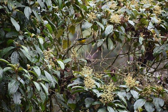 Campoalegre, كولومبيا: Quieres ver estas aves..En el Eje cafetero las puedes ver..contactarnos tenemos desde Pasadias hasta rutas de 15 días por varios sitios de Colombia