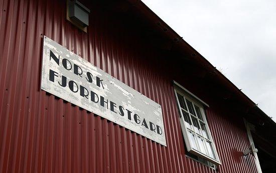 Gloppen Municipality, Norwegia: Norsk Fjordhestgard