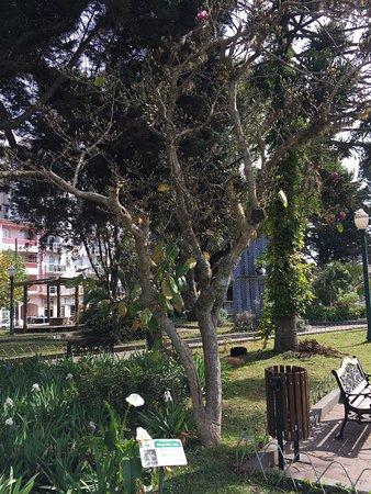 Linda Praça