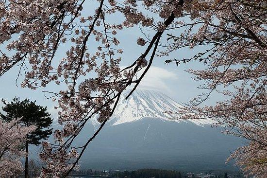 英語が話せるガイド付き富士山と箱根のプライベートチャーター