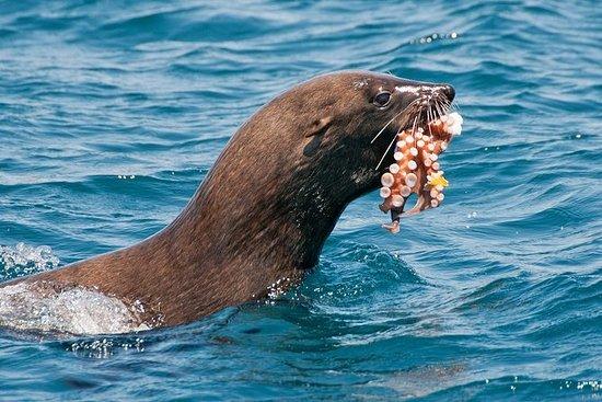 Ciudad del Cabo: Marine Wildlife...