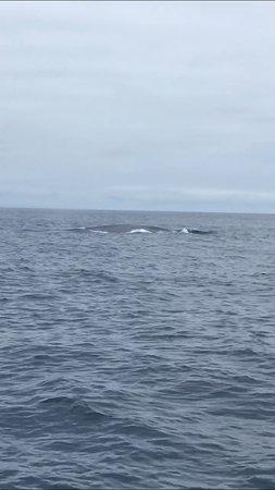 Fotografia de Ultimate Whale Watching Tour a bordo do SuperRib-15 Passenger Max