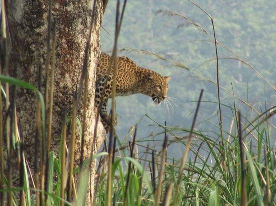 Mission Tiger Trek in Chitwan Nationak Park, 3 days hike: Mission Tiger Trek in Chitwan Nationak Park.