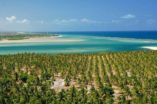Tour a las Playas del Francés, Barra...