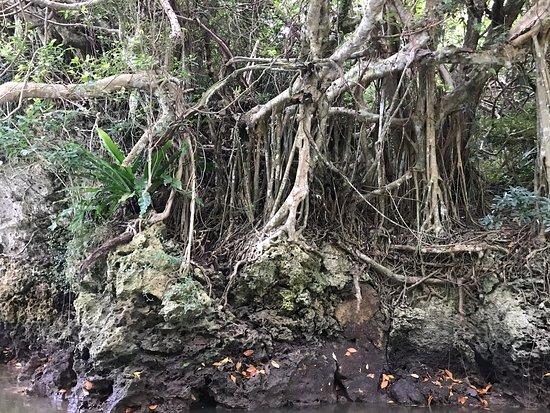 早朝から静かな川面を見ながらマングローブやここでしか見れない洞窟など楽しいガイドを交えてもらい楽しめました。終わってもまだ9時なので十分楽しめます